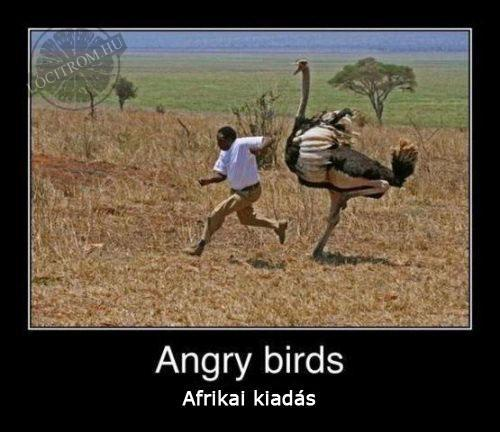 Angry birds - afrikai verzi